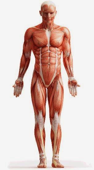 Introducción a la Anatomía Humana UI1: Anatomía y Fisiologia Humana