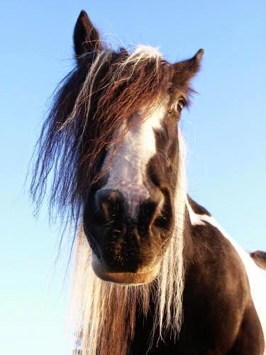 Q Horse Names Cathy Cassidy: Dreamca...