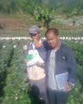 pengamatan pada tanaman stroberry