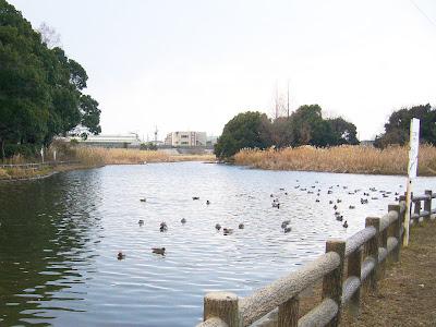 大阪府・深北緑地ウォーキング 水鳥