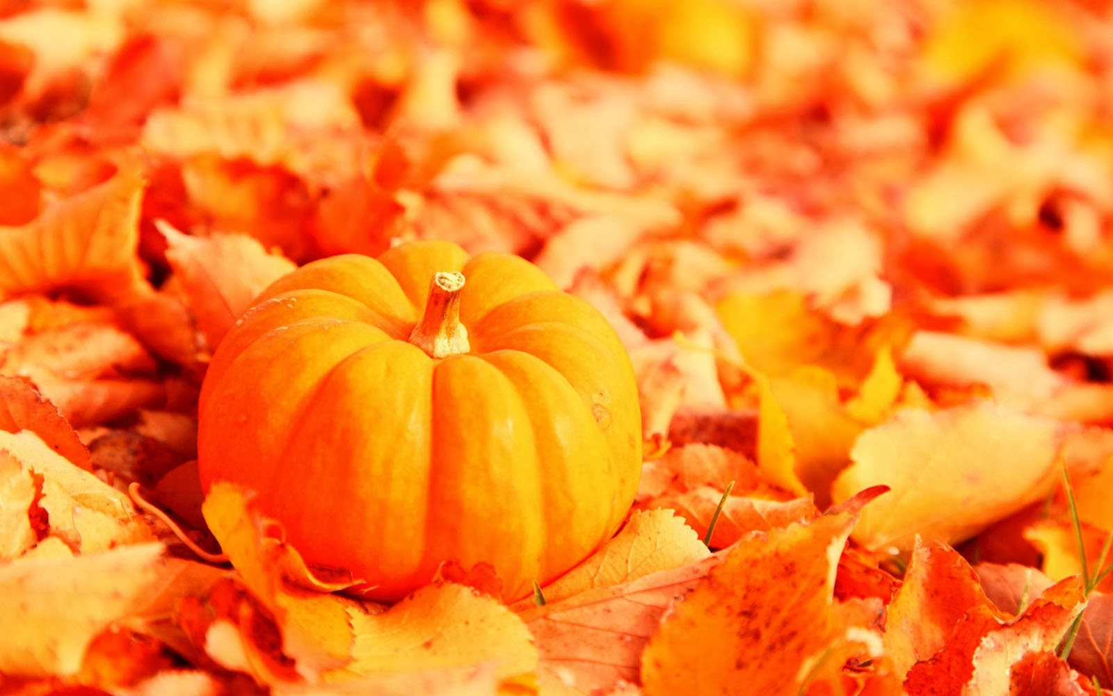 wallpapers pumpkin wallpapers