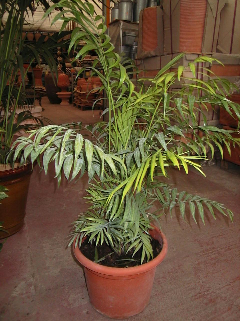Fitosofia vivero de plantas ornamentales primera parte for Importancia de las plantas ornamentales