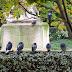 Jardin du Palais Royal - les pigeons