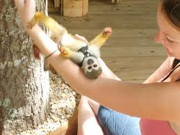 Squirrel Monkey Pet