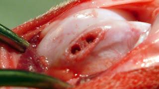 fresado forage
