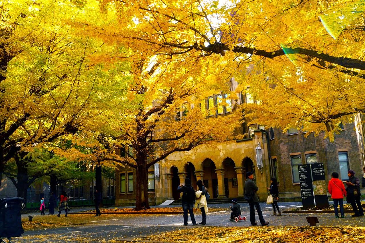 University of Tokyo, Kōyō, 東大, 東京大学, 紅葉