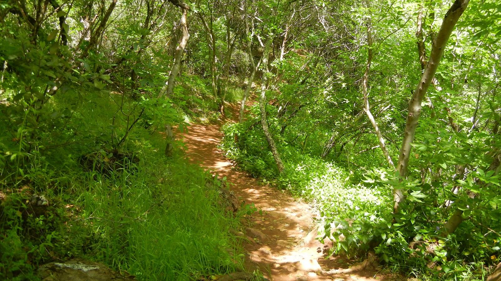 Peachy Hiker: Hidden Falls in Placer County, CA on hidden falls adventure park map, auburn ca trail map, auburn california waterfall trails,