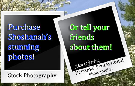 Purchase Shoshanah's Photographs