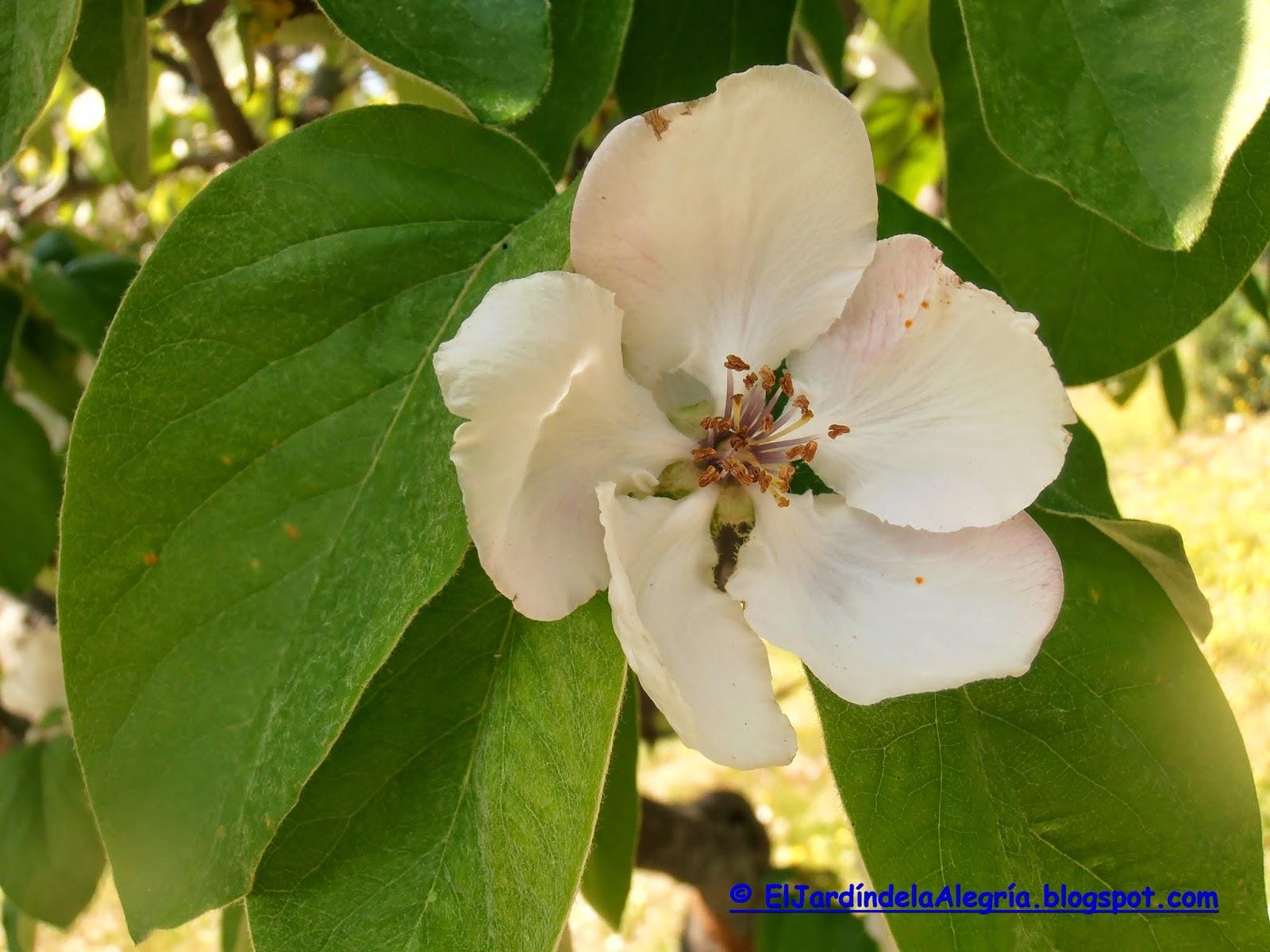 El jard n de la alegr a el frutal de floraci n m s for El jardin de la alegria cordoba