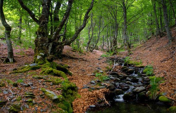 Noticias de historia natural c mo compiten los rboles - Casitas en el bosque ...