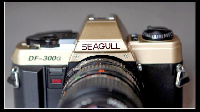 海鷗相機返歸! - 亮麗 - 亮麗的博客