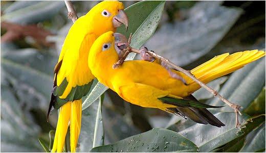 Top  Most Beautiful Birds Wallpapers