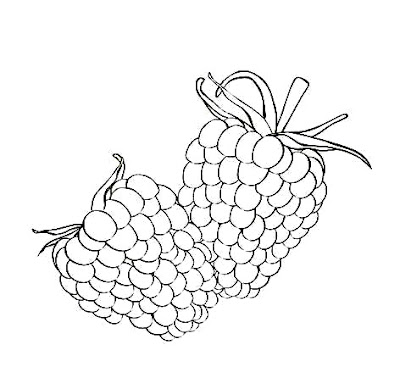 Free Raspberry Coloring Pages Pictures  Minister Coloring