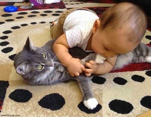 Photo drôle chat avec Bébé
