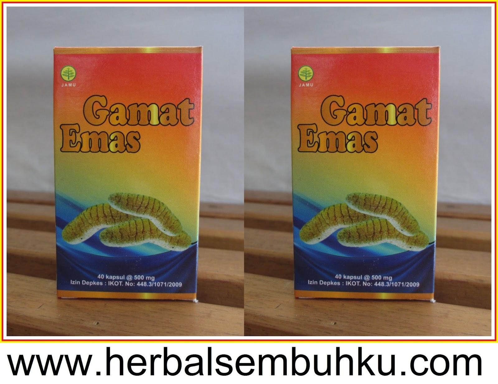 gamat emas kapsul gamat murah surabaya 085755201000 jual kapsul gamat emas herbal insani