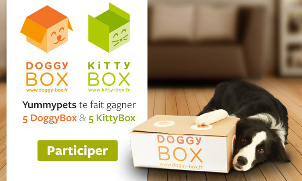 5 DOGGY BOX ou 5 KITTY BOX