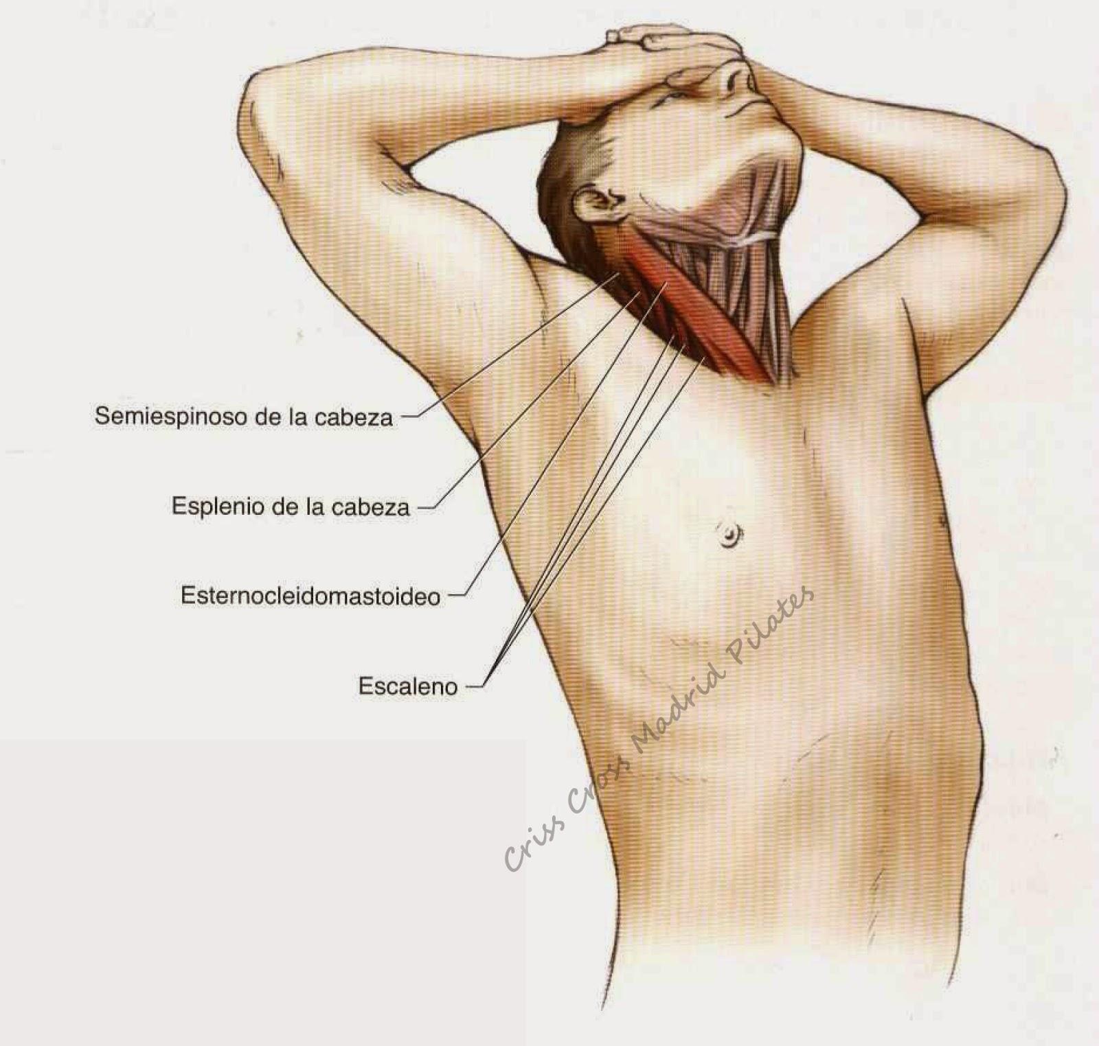 El tratamiento de la columna vertebral en los balnearios en vengrii