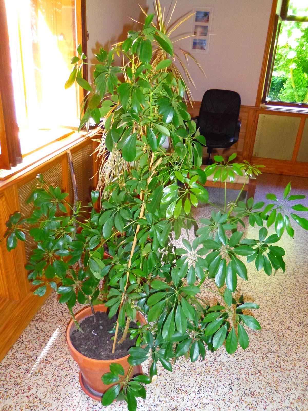 Aux petits soins pour mes plantes vertes lire for Nettoyer feuilles plantes