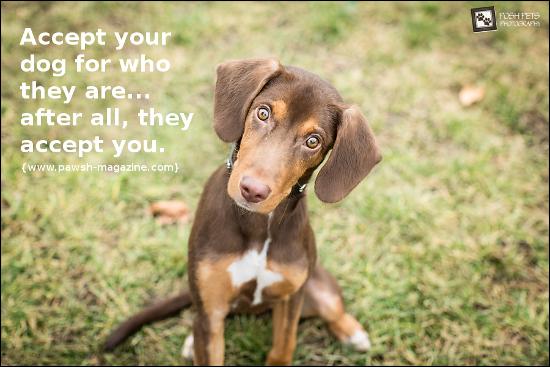 dog training quotes inspirational quotesgram