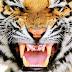 7 Manusia Harimau - Episode Pendekar Wanita Buta (Bag. 2)