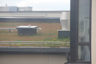 bird on green roof