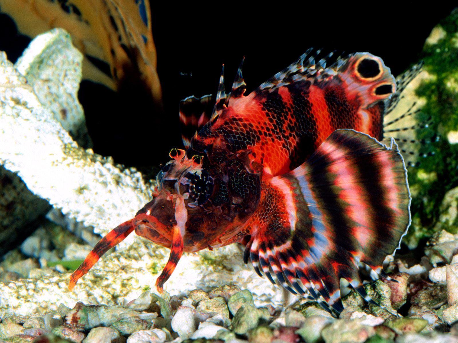 http://3.bp.blogspot.com/-bxfFw-lj3e8/TpCDtDuIn7I/AAAAAAAAAH8/CeRb3YXvWrE/s1600/naturegallery2011.blogspot+%25289%2529.jpg