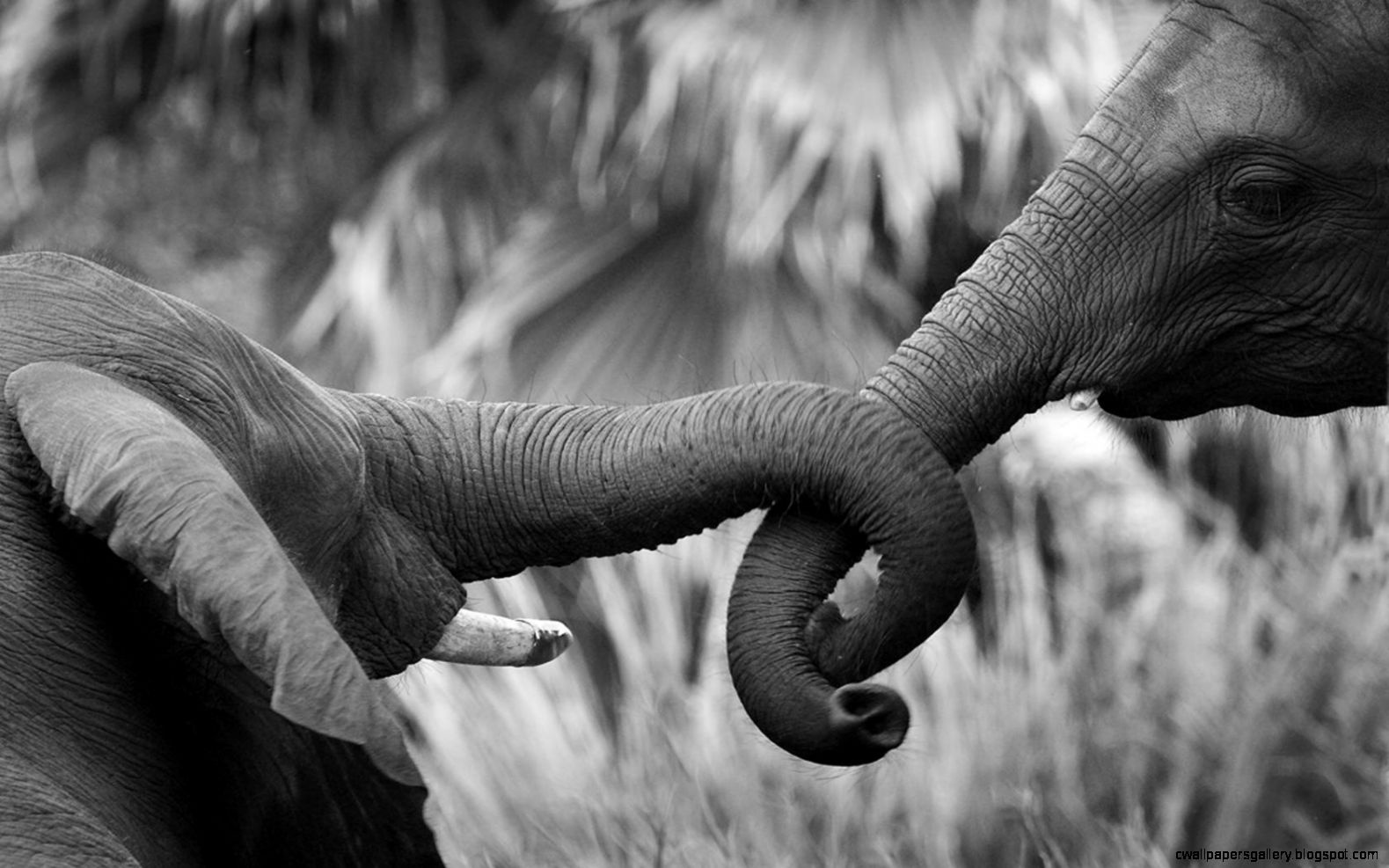 Elephant Love Quotes QuotesGram