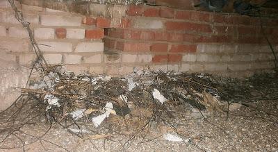 Гнездо галки на чердаке