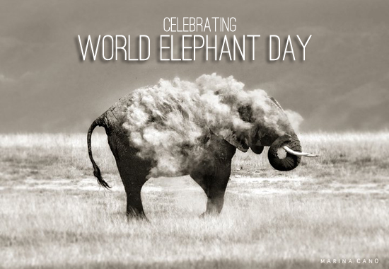 #WorldElephantDay