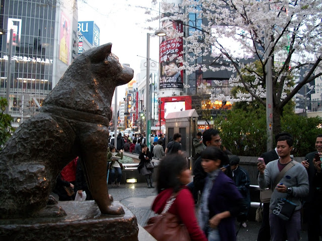 Get Up and Go!: Puparazzi: Hachiko