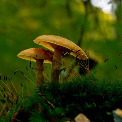 photographing fungi