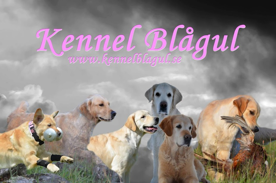 KENNEL BLÅGUL