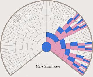 http://3.bp.blogspot.com/-bzSdU-ZJpB8/UsW_9X6TavI/AAAAAAAAAyc/e-kIByVb-1o/s320/X-Chromosome+fan+chart+male+-+from+Blaine+300dpi.tif