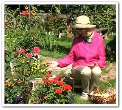 видео урок Выращивание герани в саду