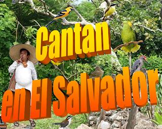 Carlos Guzmán, Aves que Cantan en El Salvador, aves cantoras, el canto de aves en El Salvador, chontes, pijuyos, cenzontles, aurora, chío, dichosofuí, urraca, paloma ala blanca, canción del cipitío, canto de aves, canto de pájaros, sonidos y llamados de las aves en El Salvador, canto de aves salvadoreñas, aves de El Salvador, canto de pájaros salvadoreños, canto de pájaros en El Salvador