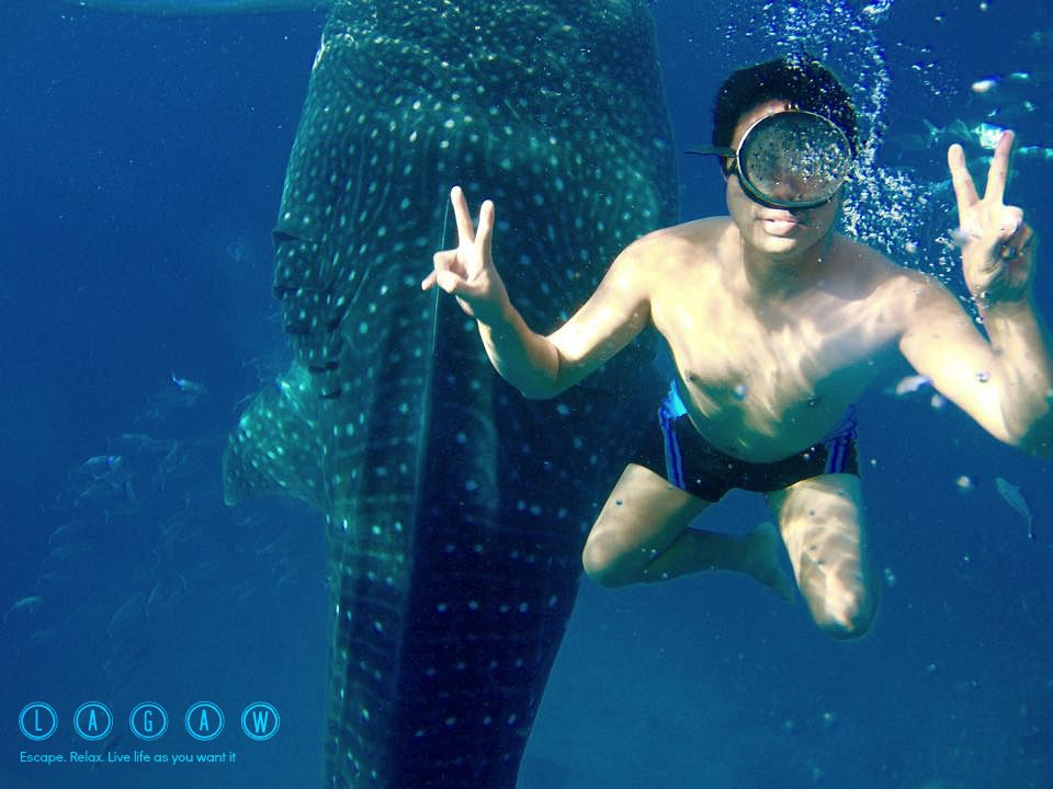 oslob whale shark watching the encounter with gentle giants