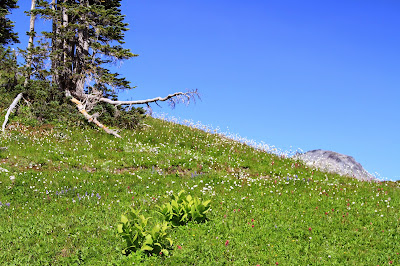 Meadow Along Skyline Trail