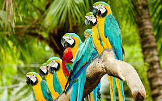 Parrots Family Love HD Wallpaper