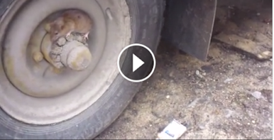 An eye-catching video shows a real-life Tom and Jerry encounter with the mouse successfully outsmarting the cat.   The mouse makes its way to the rim of a parked car and hides there successfully. The cat, which is in hot pursuit, circles the tire but fails to spot its prey. It gives up and moves away.