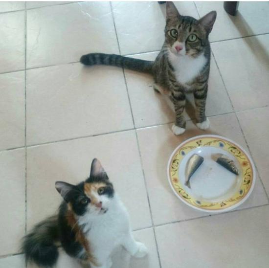 Kucing Sekarang Pun Dah Pandai Pilih Makan