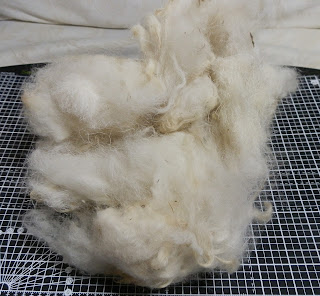 Picture of clump of washed but uncarded white sheep's wool