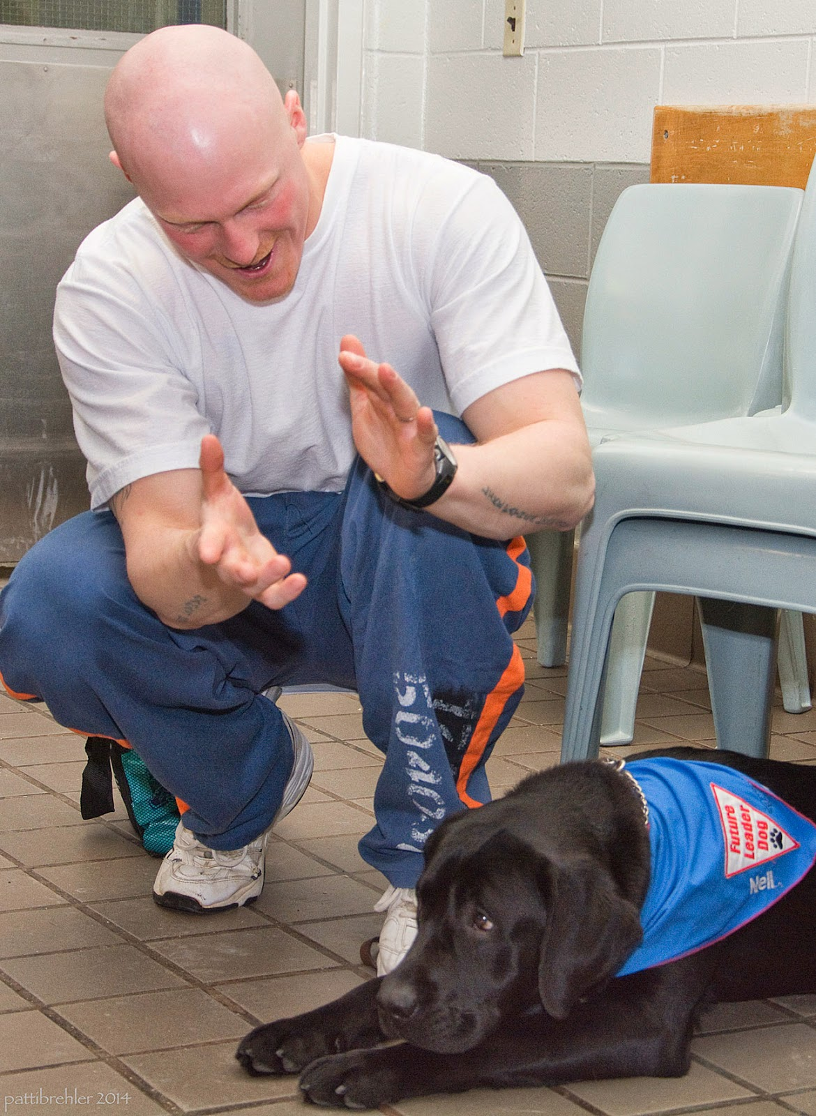 A bald young man wearing a white t-shirt and prison blue pants is sqatting next to a black lab that is lying down under a chair facing out. The man is clapping his hands and looking at the dog. The lab has her chin on her front legs as if she is embarrassed! She is wearing a blue Future Leader Dog bandana.