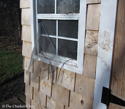 Predator tried to access the chicken coop through the window