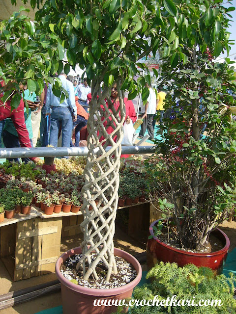 Ahmedabad flower show