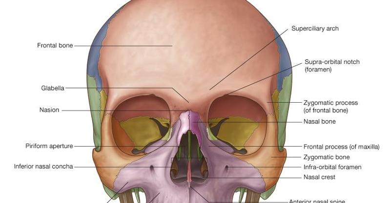 Images of Anterior Nasal Aperture - #SpaceHero
