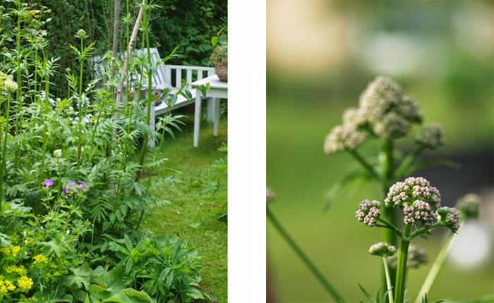 Blomster til den vilde og frodige have