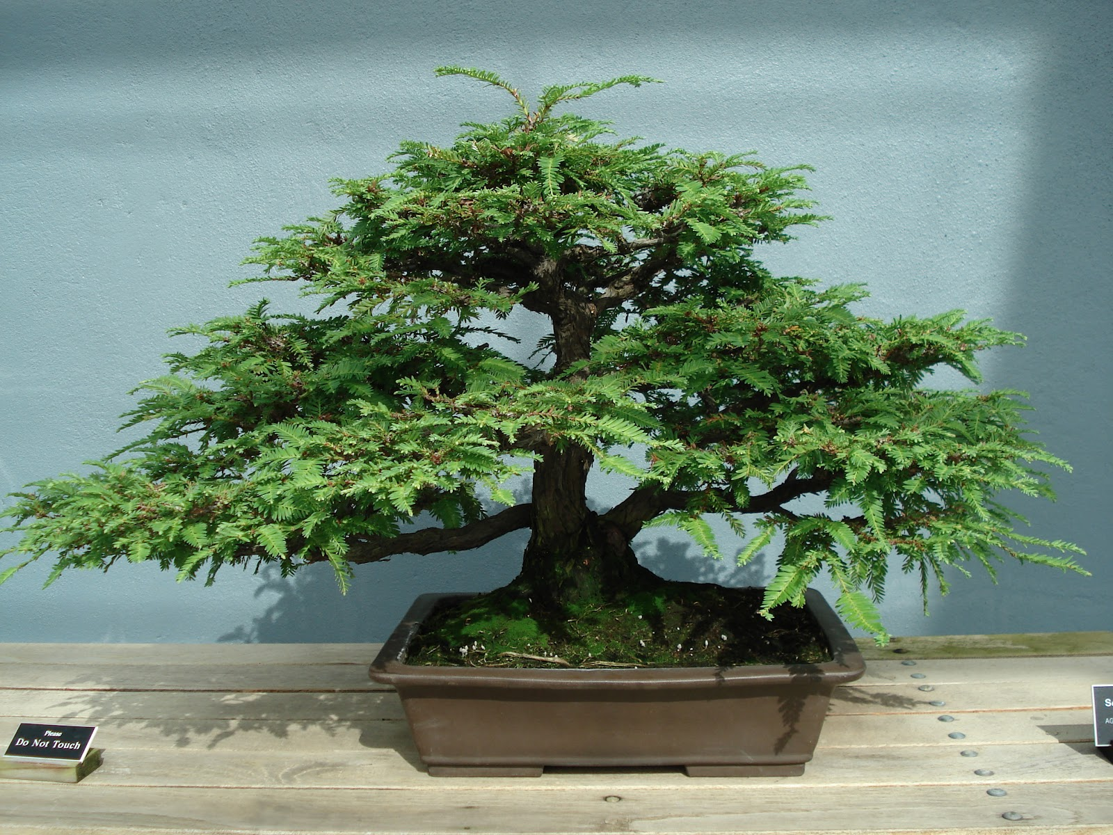 Backyard Bonsai Trees : Home Garden and Landscaping Outdoor Bonsai Trees