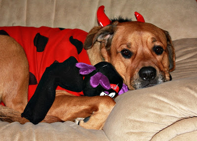 mad cow devil dog costume - turtlesandtails.blogspot.com