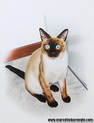 Trudi my traditional Siamese cat drawing illustration airbrush colored pencils