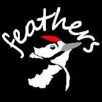 Feathers Birding Blog